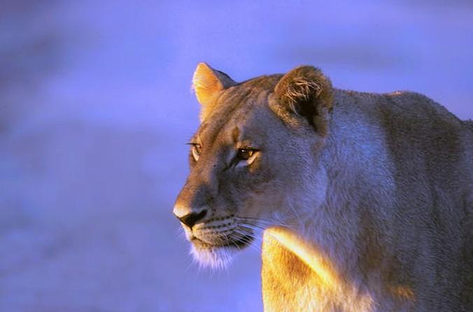 (fot. Arno Meintjes Wildlife / Foter / CC BY-NC)