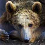 Przyjaciele i niedźwiedź