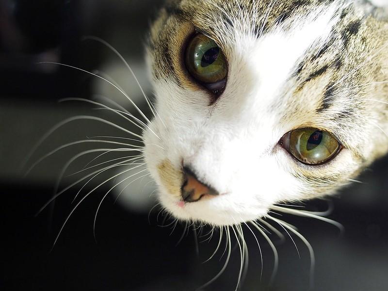 Chrzest kota